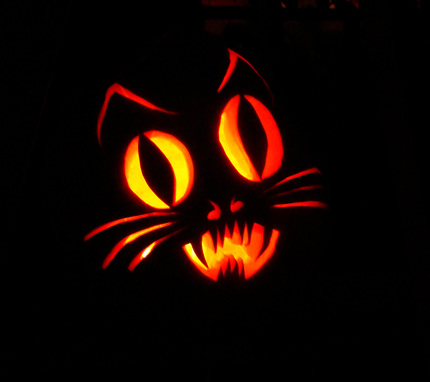 DSC02953 Cat Pumpkin